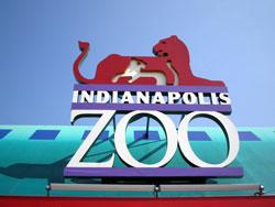 indy_zoo.jpg